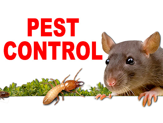 Image result for pestcontrol